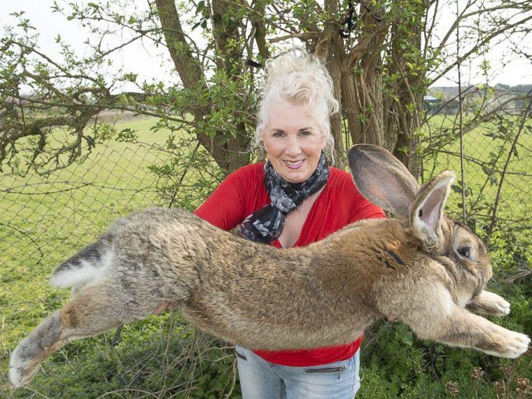 REX-Annette-Edwards-Bunny-MEM-170426_4x3_992